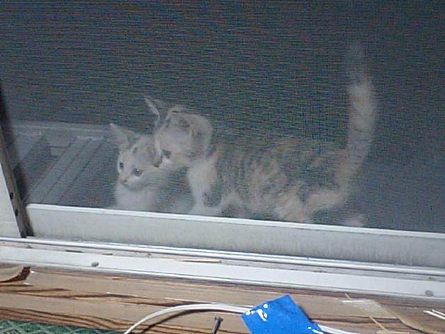 庭に子猫のペアがやってきた