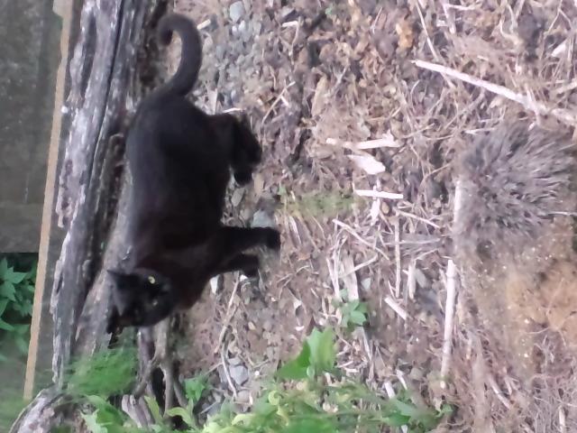 うちの黒猫さんに散歩をせがまれてお付き合い。